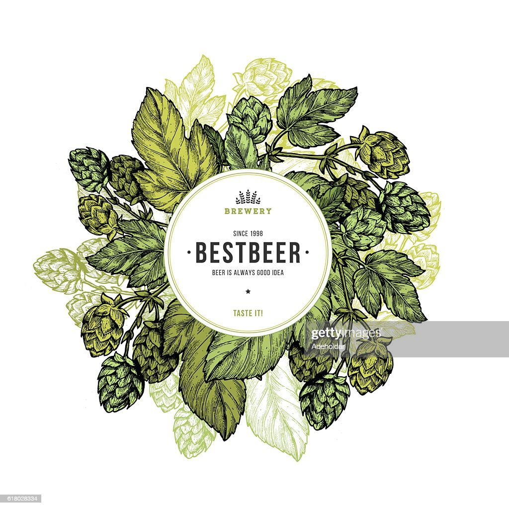 Beer hop frame. Engraved style illustration. Vintage beer design template.