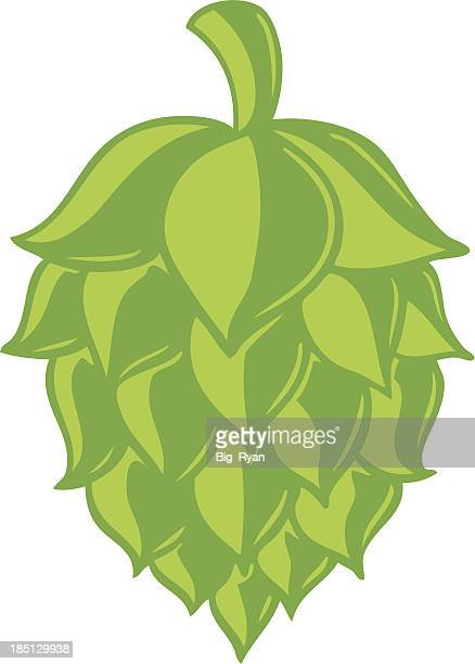 beer hop - brewery stock illustrations, clip art, cartoons, & icons