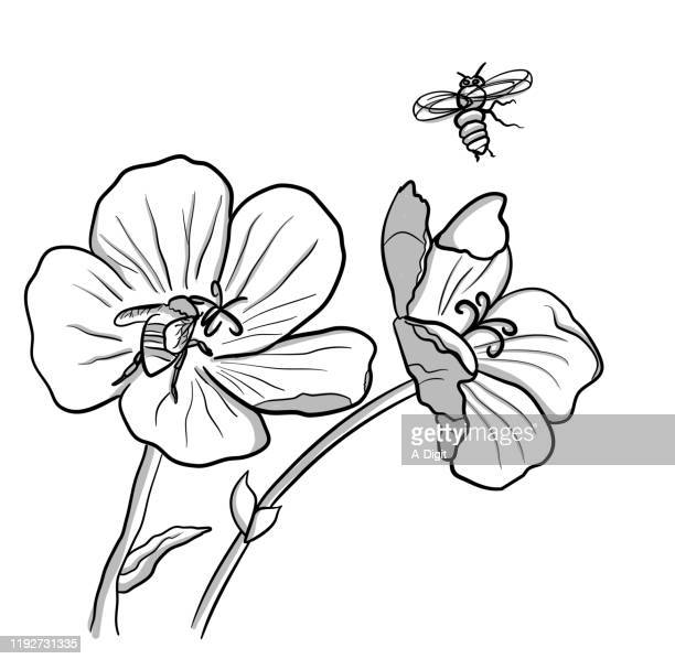 bees doing pollination - worker bee stock illustrations