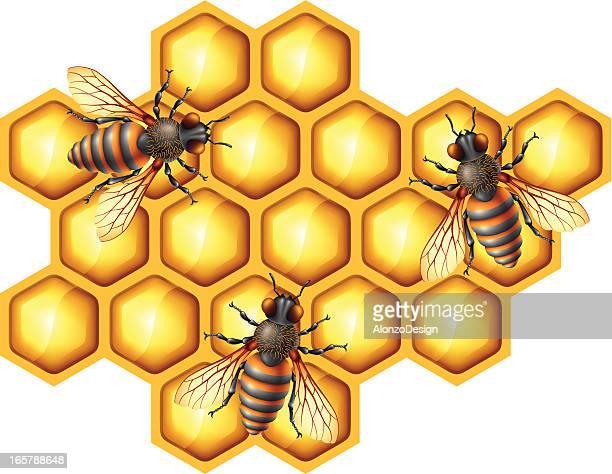 illustrations, cliparts, dessins animés et icônes de abeilles et nid d'abeille - ruche
