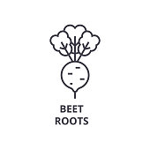 beet, roots line icon, outline sign, linear symbol, vector, flat illustration