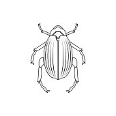 beetle goliath icon. Element of insect for mobile concept and web apps icon. Thin line icon for website design and development, app development
