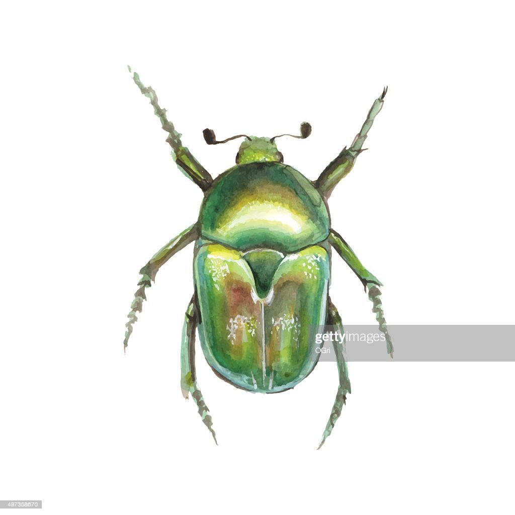 Beetle. Watercolor vector