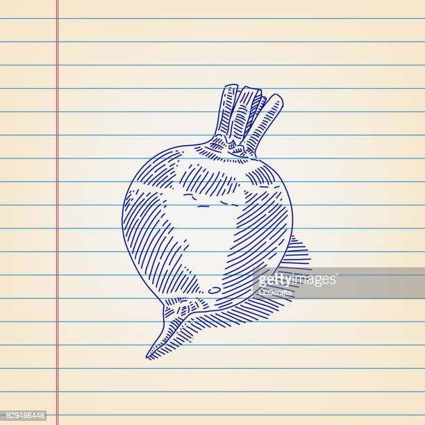 beetroot drawing on lined paper - common beet stock illustrations, clip art, cartoons, & icons