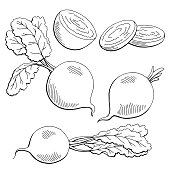 Beetroot graphic vegetable black white isolated sketch illustration vector