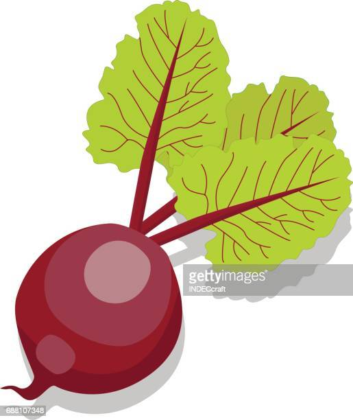 beetroot - common beet stock illustrations, clip art, cartoons, & icons