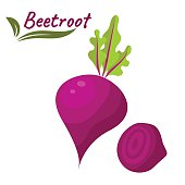 Beetroot vegetable vector illustration. Beet root with leaves and slice