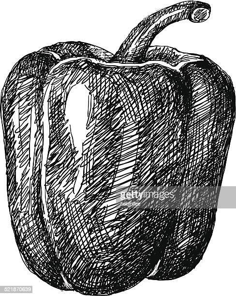 bell pepper sketch - bell pepper stock illustrations, clip art, cartoons, & icons