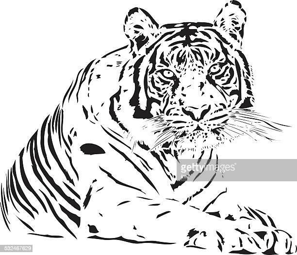 Bengal Tiger illustration in black lines