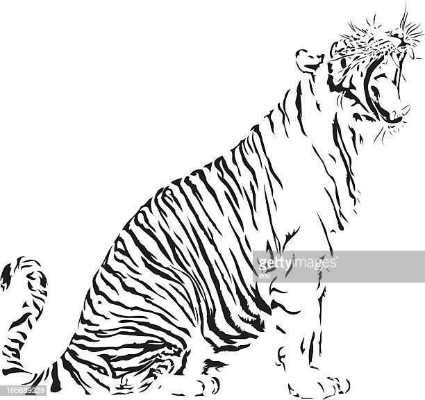 Bengal Tiger illustration