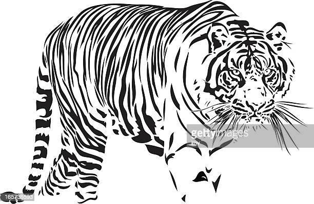 ilustraciones, imágenes clip art, dibujos animados e iconos de stock de tigre de bengala medio - tigre