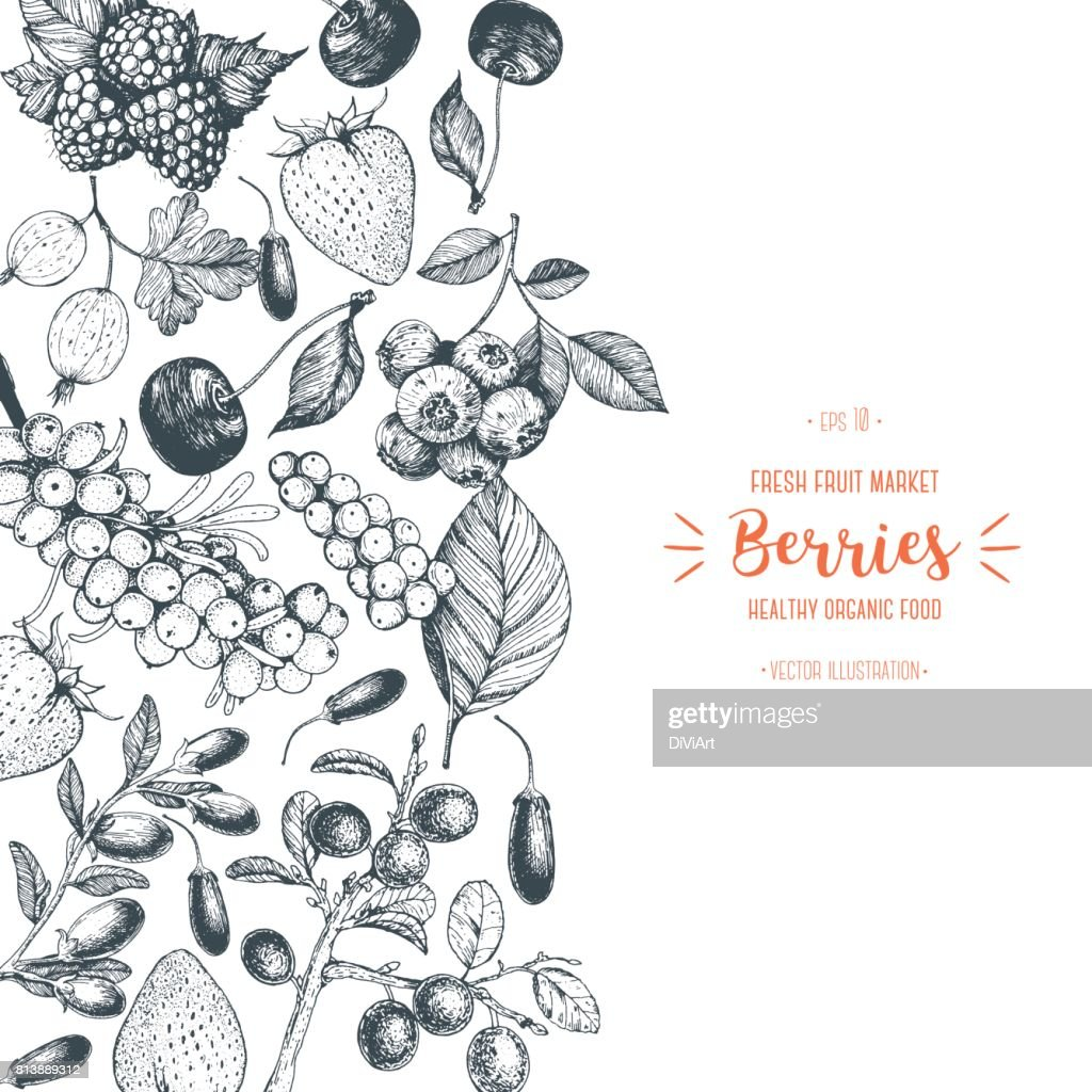 Berries hand drawn vector illustration. Hand drawn sketch illustration with with cherry, raspberry, cranberry, barberry, strawberry, goji berries. Healthy food, design template with berries.
