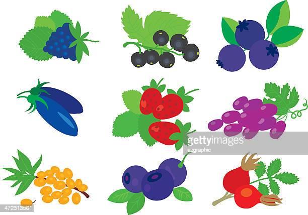 berries set. - arrowwood stock illustrations, clip art, cartoons, & icons
