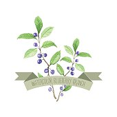 Berry branch watercolor vector handpainted set