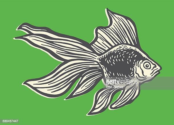 illustrations, cliparts, dessins animés et icônes de beta de poisson - poisson rouge