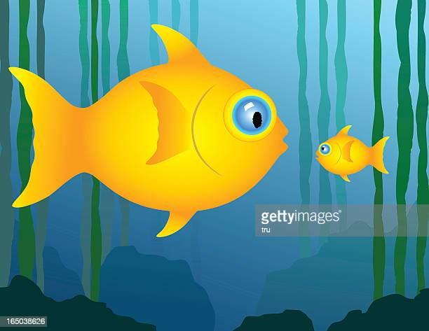 Big and little fish