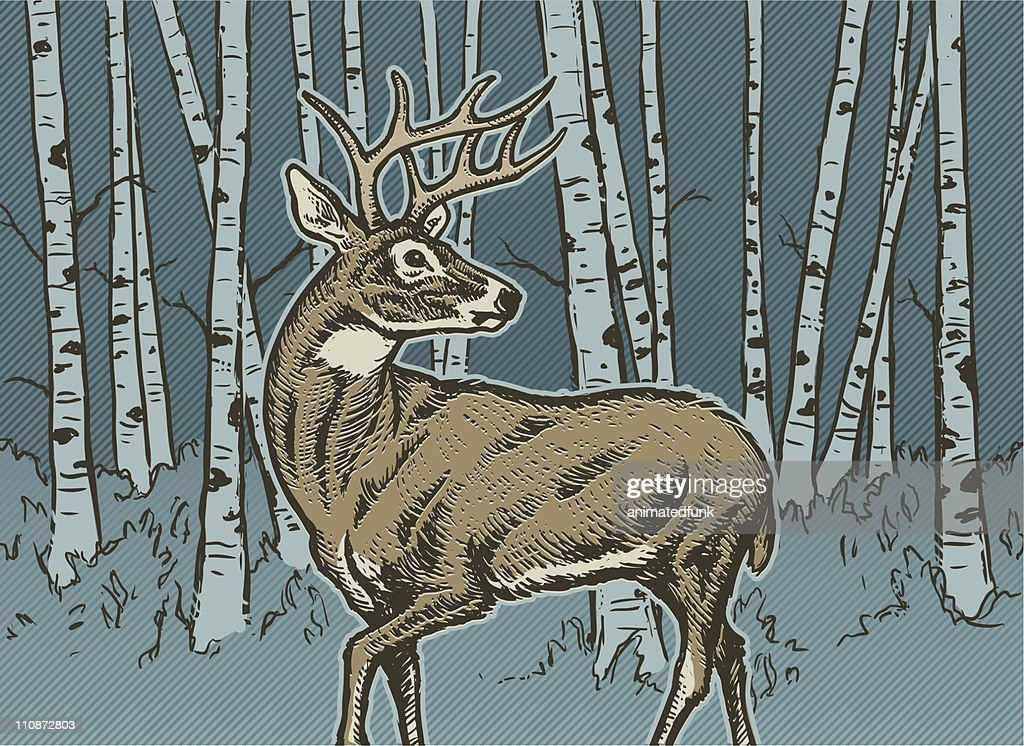 Big Buck : stock illustration