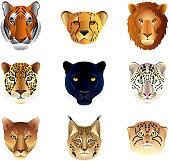 Big cats heads vector set