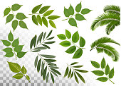 Big collection of braches with leaves on transparen background. Vector.