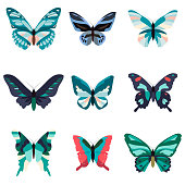 Big collection of colorful butterflies.  isolated on white.