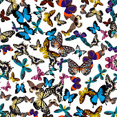 Big collection of colorful butterflies.  isolated on white. Vector illustration