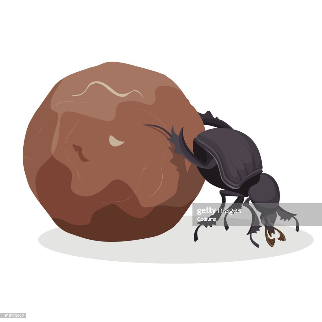 Big dung beetle that pushes big dirty ball