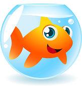 Big Goldfish in fish Tank Smiling and looking at Camera