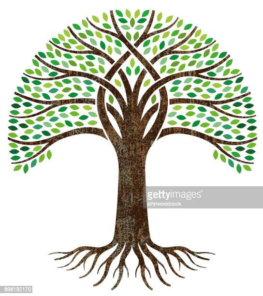 big green tree roots illustration - tree stock illustrations