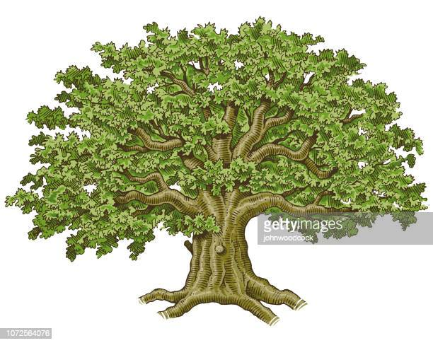 big hand drawn tree vector illustration - tree trunk stock illustrations, clip art, cartoons, & icons