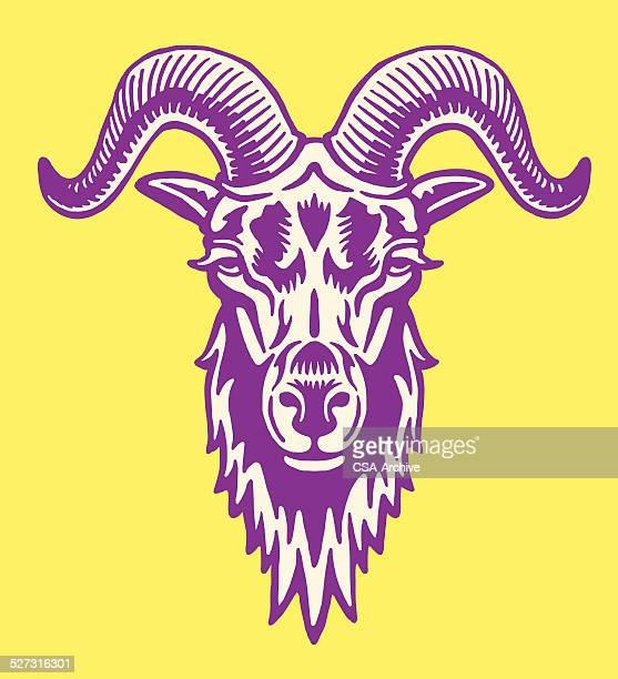 illustrations, cliparts, dessins animés et icônes de big cornu de chèvre - ram animal