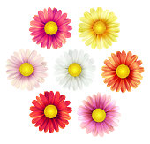 Big set of beautiful colorful spring daisy flowers isolated on white background. Vector illustration