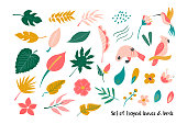 Big set of bright tropical leaves and birds. Vector illustration