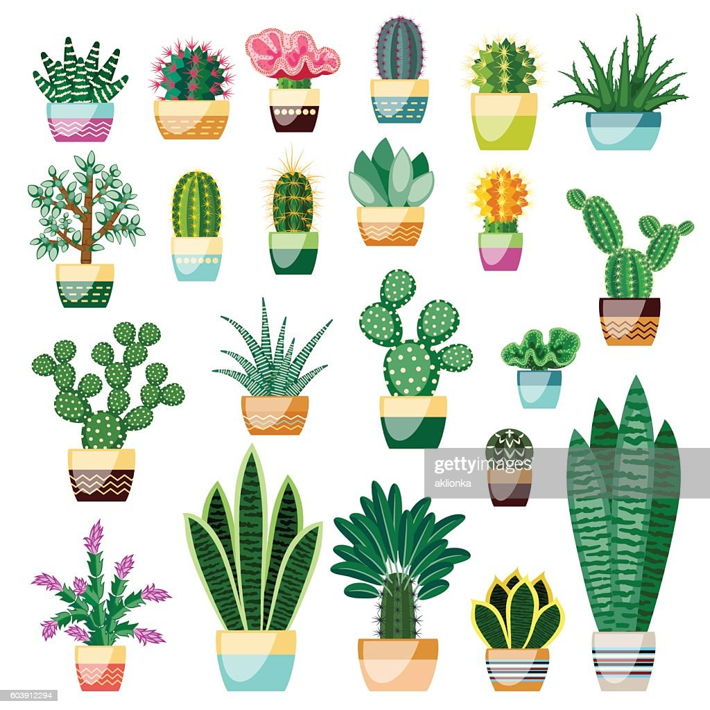 Big set of cactuses and succulents in pots.