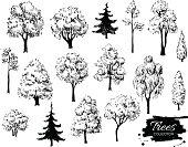 Big set of hand drawn tree sketches.