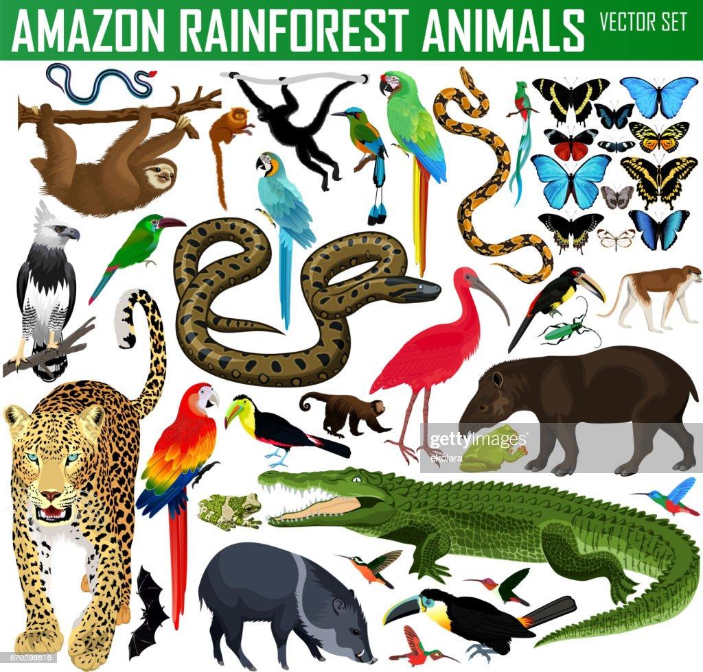 big set of vector amazon rainforest jungle animals