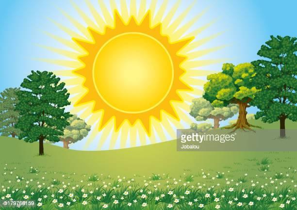 ilustraciones, imágenes clip art, dibujos animados e iconos de stock de big sun over a landspace green nature - planta de manzanilla