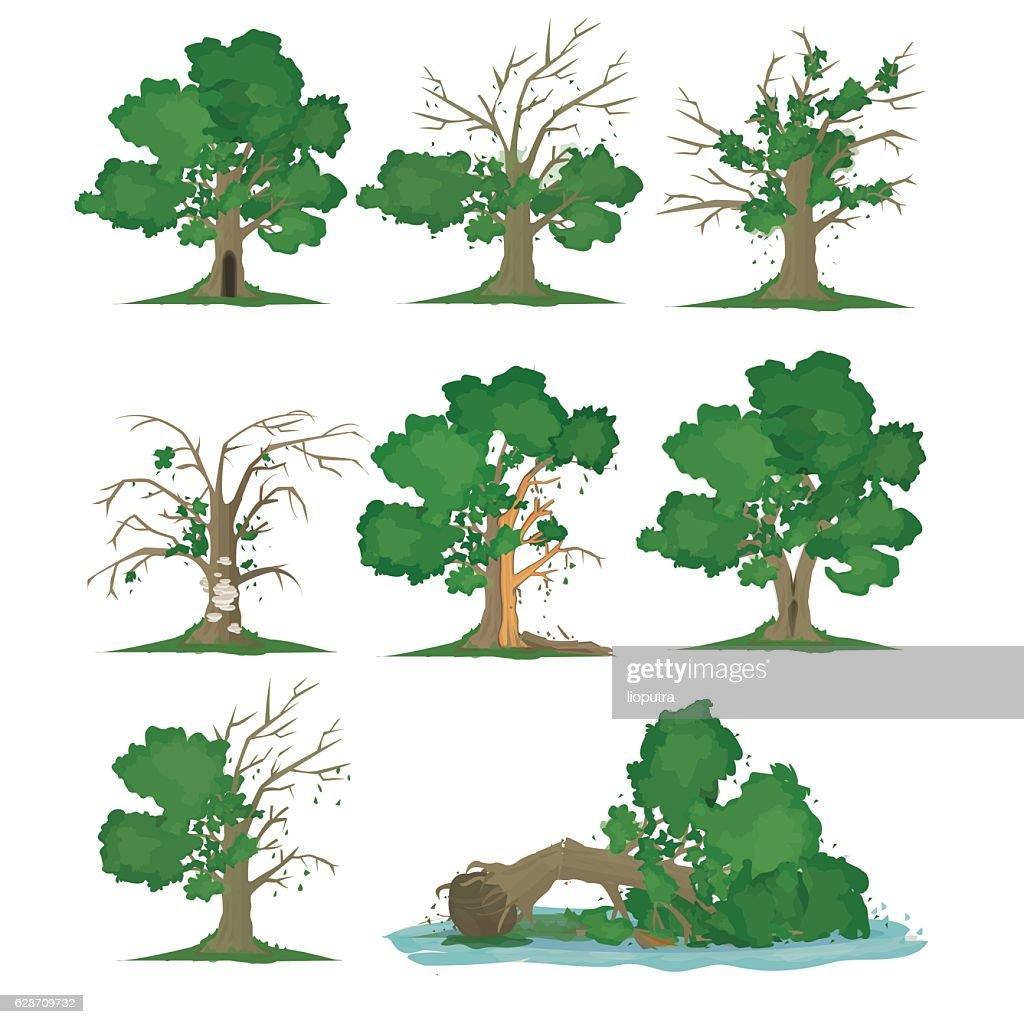 Big Tree Problem