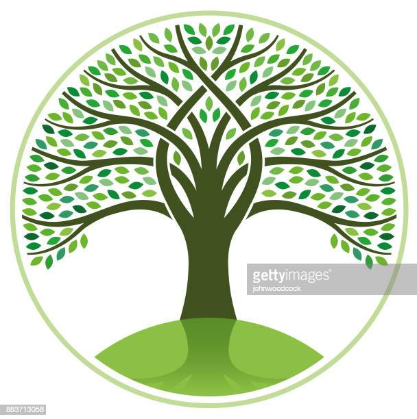 big tree vector illustration - tree stock illustrations, clip art, cartoons, & icons