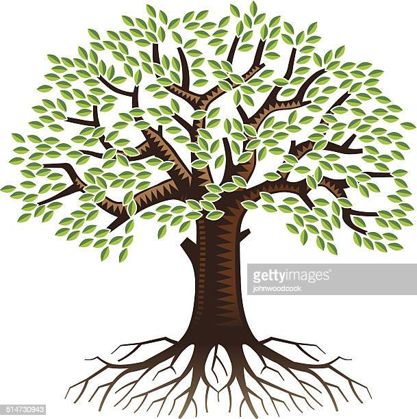big tree with roots - root stock illustrations, clip art, cartoons, & icons