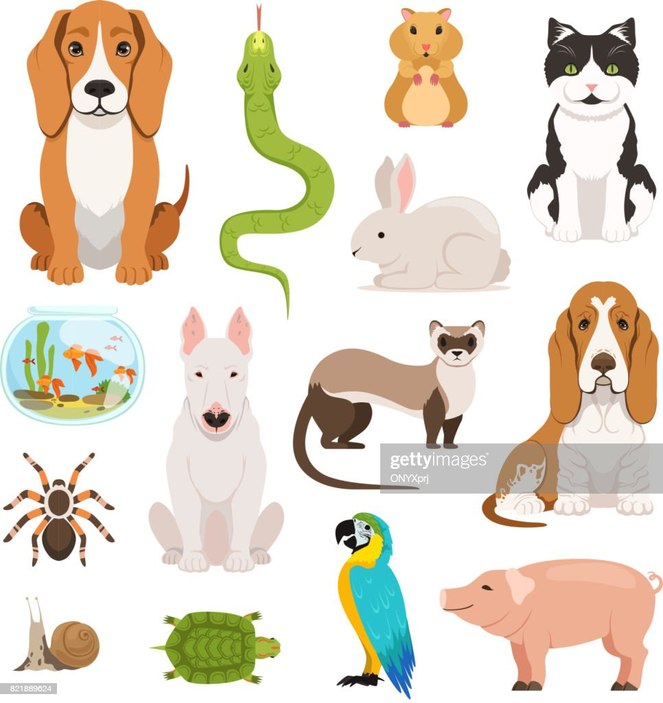 Big vector set of different domestic animals. Cats, dogs, hamster and other pets in cartoon style