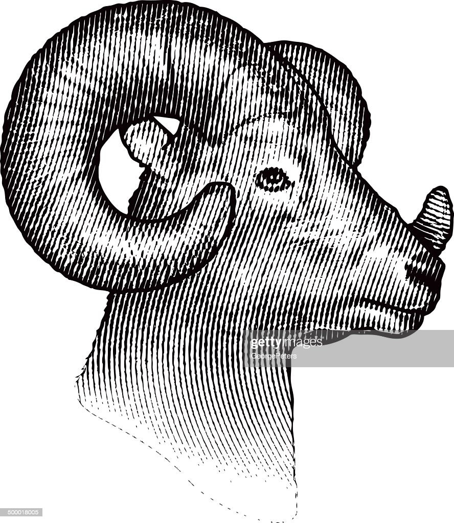 Bighorn Sheep Isolated on White Background : Stock Illustration