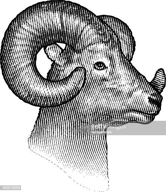 bighorn sheep isolated on white background - ram animal stock illustrations, clip art, cartoons, & icons
