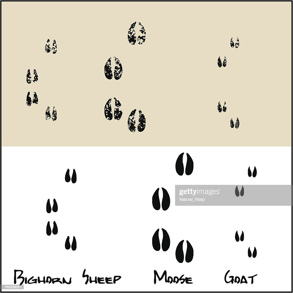 Bighorn Sheep - Moose - Goat