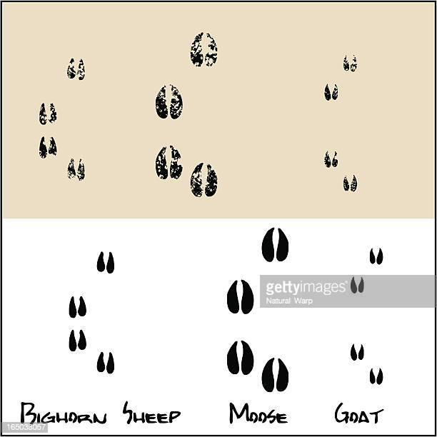 bighorn sheep - moose - goat - animal track stock illustrations, clip art, cartoons, & icons