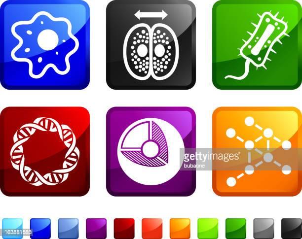 ilustraciones, imágenes clip art, dibujos animados e iconos de stock de biology and microorganismos sin royalties de vector icon set pegatinas - cerebral nuclei