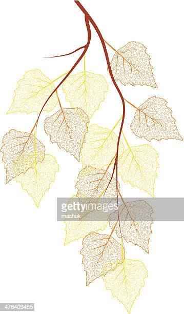 birch autumn branch