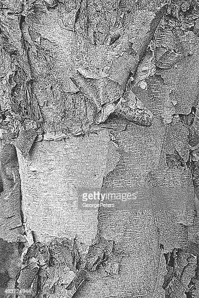 birch bark textured background - tree bark stock illustrations, clip art, cartoons, & icons