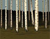 Birch Forest Woods
