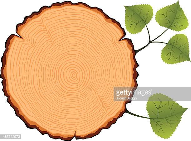 birch tree cross section - tree rings stock illustrations, clip art, cartoons, & icons