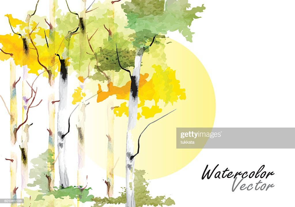 Birch tree ,forest birch trees  vector watercolor brush hand drawn